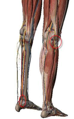 nerve entrapments causing foot pain