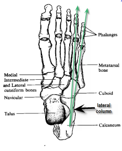 lateral_column_pain