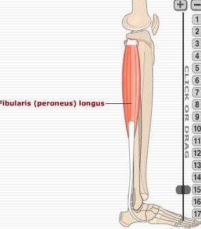 outside of leg pain
