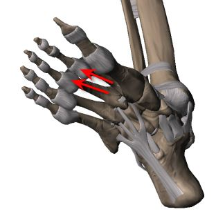 capsulitis of second and third toes