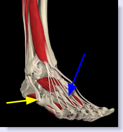 tendinitis of foot