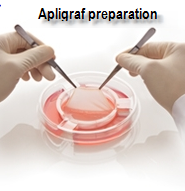 Apligraf preparation