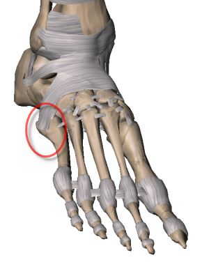 base of fifth metatarsal