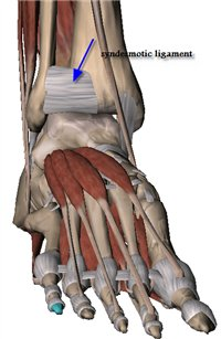 anterior inferior tibio-fibular ligament